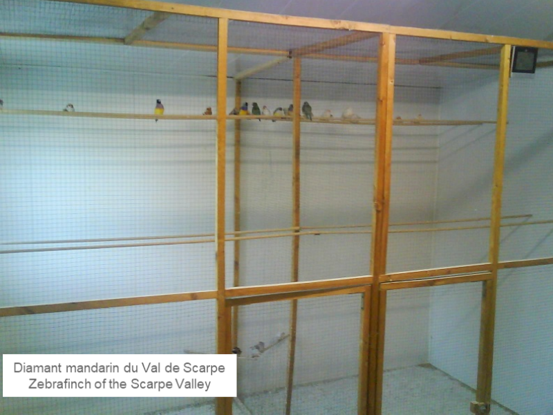 2 aviaries