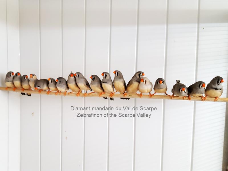 Female flocks