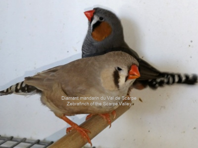 Brown female gray male couple