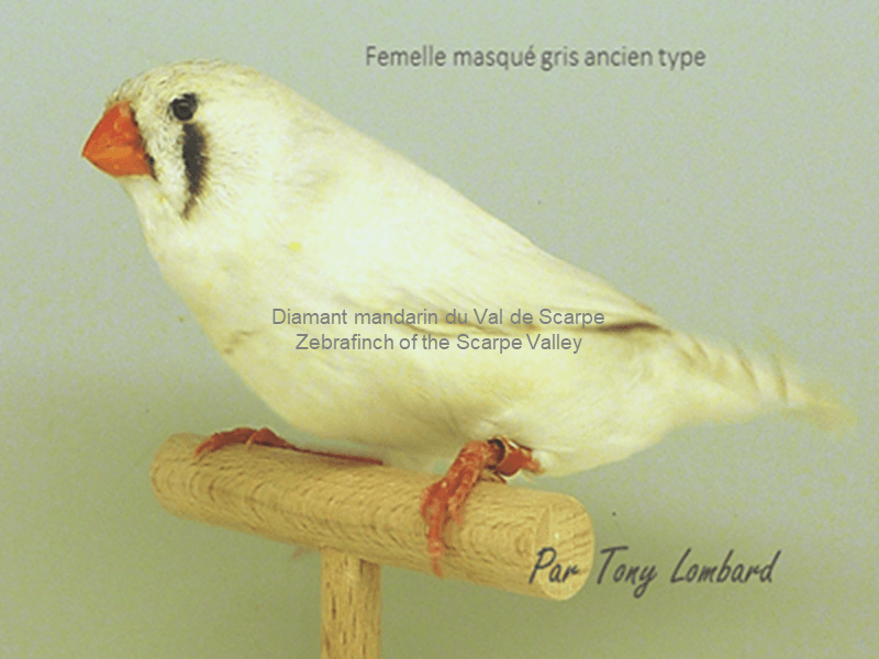 Old type gray mask female