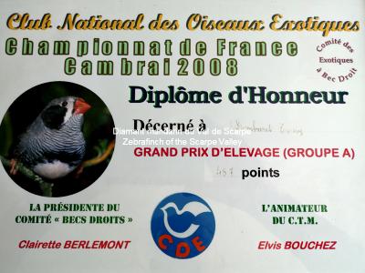 Diploma d onore gran Premio di allevamento