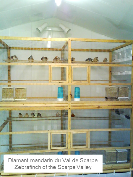 Mini aviaries
