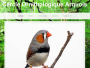 Cercle ornithologique arquois 2