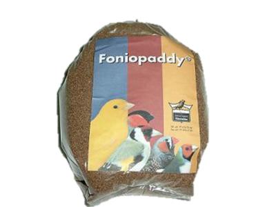 Entete article le foniopaddy