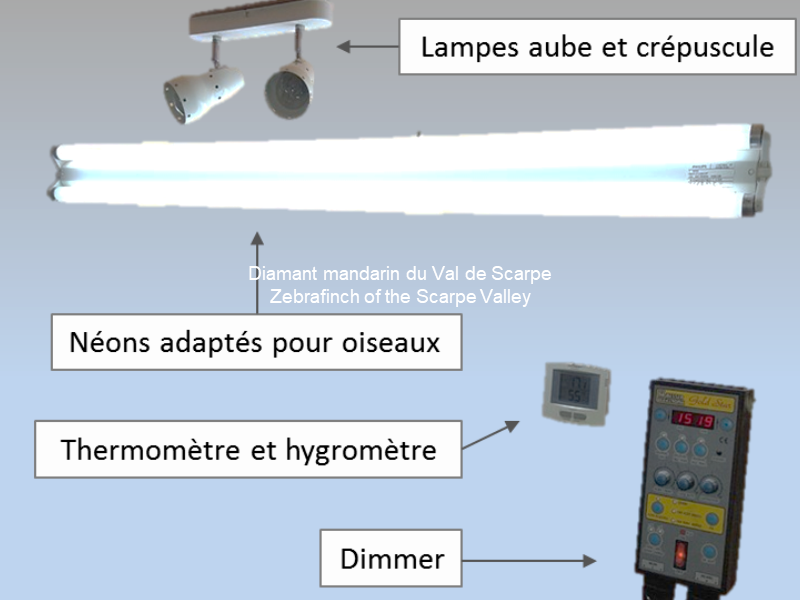 Entete article principe de montage eclairage piece d elevage