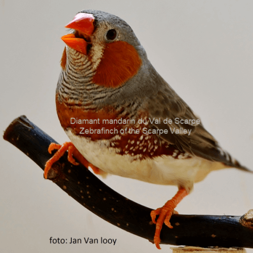 Jan VAN-LOOY