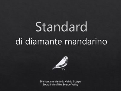Standards diamante mandarino